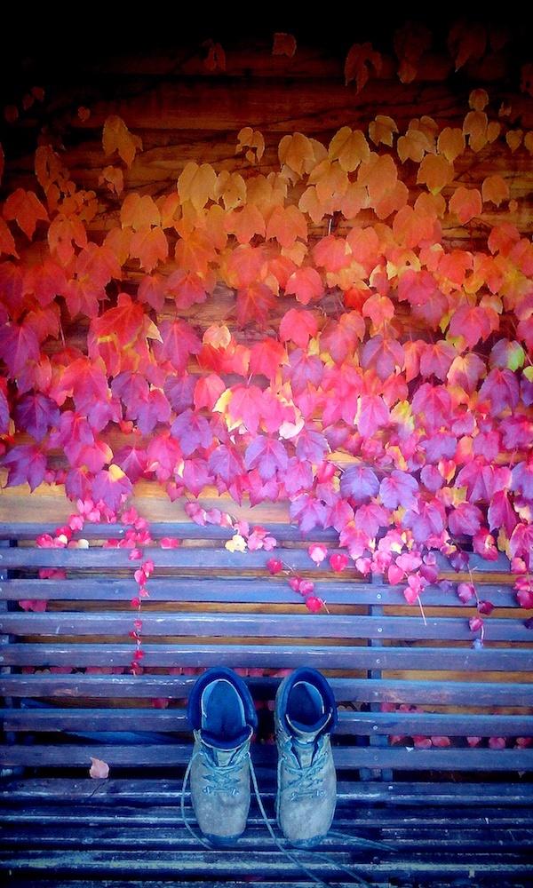 tina-rogelj_pohod-v-jeseni